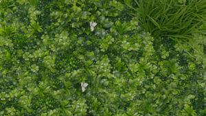 Le mur végétal, une occultation aussi esthétique que pratique