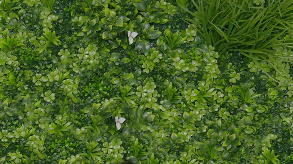 Idée Grillage, nouveauté mur végétal